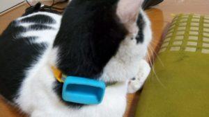 猫の首輪にGPSを着けたらマジ驚いた!お勧めGPSを使った結果の口コミ